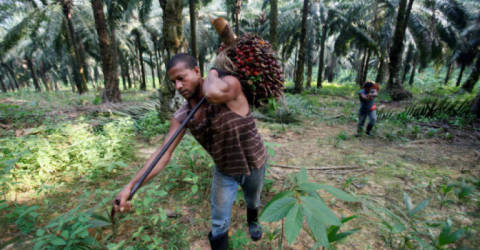 Palm falls to near 6-week low on output concerns - Malaysia Daily News